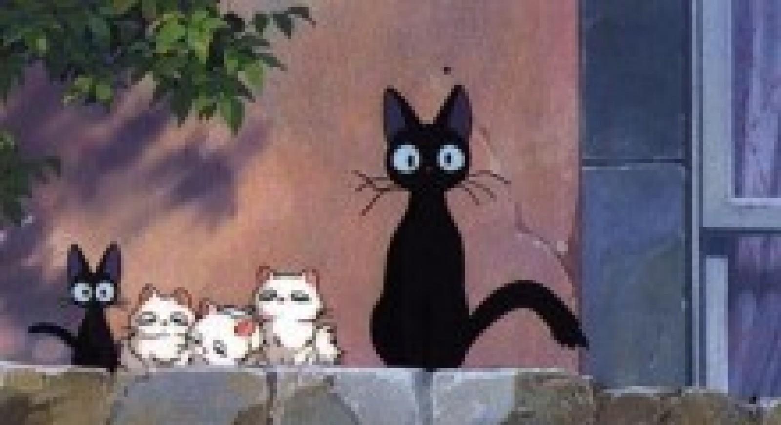 La gastrite du chat les chats font la loi - Loi sur les chats et le voisinage ...