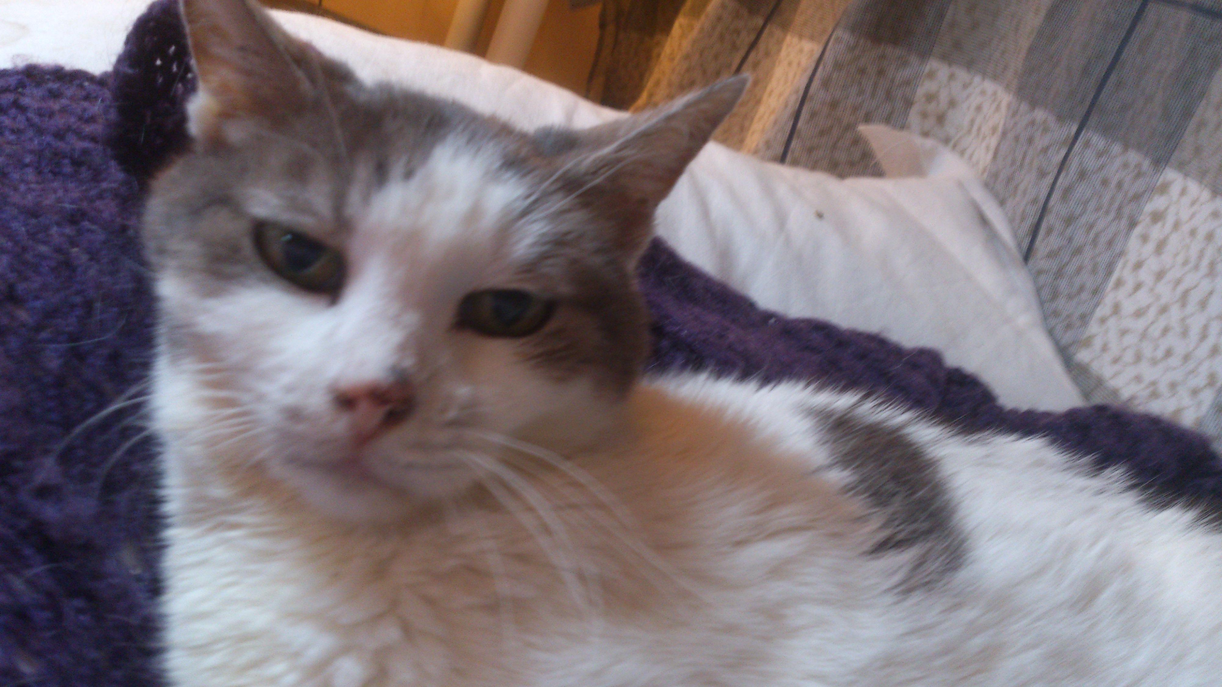 Calicivirus et parotidite quand les chats d gustent les chats font la loi - Comment empecher un chat d uriner partout ...