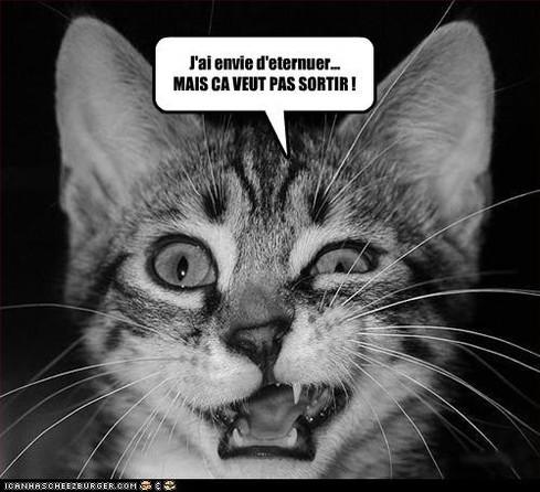 chat enrhumé