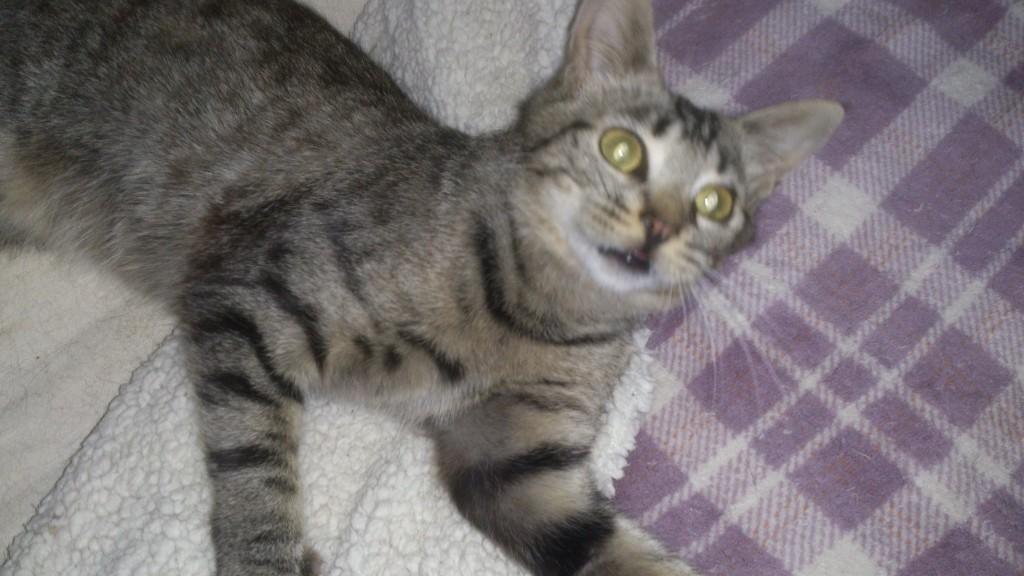 Vaincre le calicivirus les trios gagnants les chats - Loi sur les chats et le voisinage ...