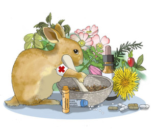 Homeopathie-Phytotherapie-et-lapin